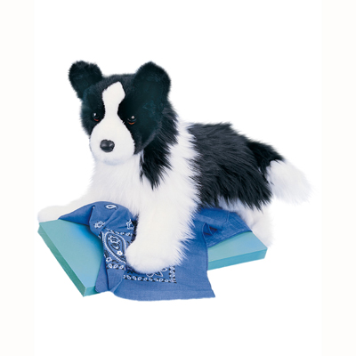 Chase Border Collie 1