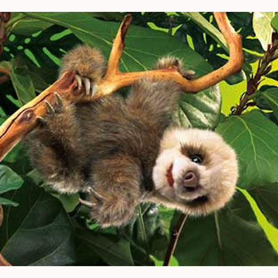 Baby Sloth puppet by Folkmanis 1